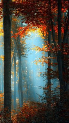 In-The-Heart-Of-The-Forest-iphone-5-wallpaper-wbix | by glbtmatch