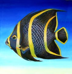 """""""French Striped Angelfish"""" by Nancy Tilles: Buy prints, posters, canvas and framed wall art directly from thousands of independent working artists at Pretty Fish, Beautiful Fish, Marine Aquarium, Saltwater Aquarium, Saltwater Fish Tanks, Underwater Creatures, Ocean Creatures, Colorful Fish, Tropical Fish"""