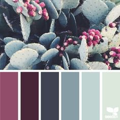 today's inspiration image for { cacti color } is by @1lifethroughthelens ... thank you Kristi for another fresh + inspiring #SeedsColor image share!