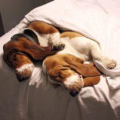 """""""sweet dreams, bro """""""