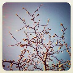 lente in aantocht