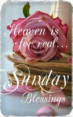 Have a blessed Sunday! Sunday Wishes, Happy Sunday Quotes, Good Morning Greetings, Happy Wishes, Good Sunday Morning, Morning Wish, Good Morning Quotes, Sunday Images, Morning Images
