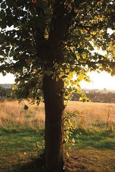 Tree, Sunny Hill Park, Hendon, London NW4, 25th July 2014