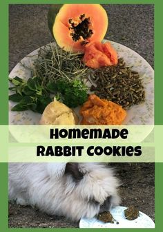 Want to bake up some tasty treats for your favorite bunny? Commercial treats can have lots of icky preservatives and artificial coloring. Homemade Rabbit Cookies Holly Waters Pets Want to bake up some tasty treats for your favorite bunny Meat Rabbits, Raising Rabbits, Bunny Rabbits, Baby Bunnies, Chinchilla, Homemade Rabbit Treats, Homemade Dog, Healthy Treats, Yummy Treats
