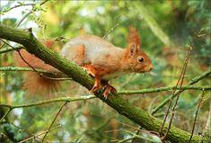 Eichhörnchen auf einem Ast - Jahreszeiten - Galerie - Community