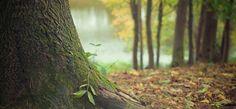 10 bosques legendarios de Castilla y León para pasear en otoño
