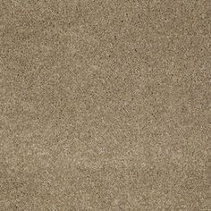 Color: 00701 Llama CCS10 Pashmina I - Shaw Caress Carpet Georgia Carpet Industries