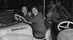 Susie, a bear from the Bertram Mills Circus, surprises two passengers in a dodgem car at Olympia, in London, 1954.
