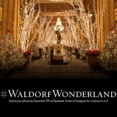 Share your #WaldorfWonderland photo for a chance to win a 2-night stay at The Roosevelt New Orleans, dinner for two to the Fountain Lounge and a Couples massage at the Waldorf Astoria Spa. Post your photo to Instagram, Twitter or our Facebook timeline that captures yourself inside our Waldorf Wonderland Lobby and be sure to tag #WaldorfWonderland to enter. http://woobox.com/baeyqg