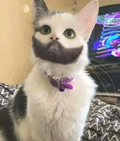 Cat with amazing beard - your daily dose of funny cats - cute kittens - pet memes - pets in clothes - kitty breeds - sweet animal pictures - perfect photos for cat moms Cute Little Animals, Cute Funny Animals, Funny Cats, Funny Looking Cats, Pretty Cats, Beautiful Cats, Animals Beautiful, Unique Animals, Beautiful Beach