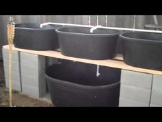 4 Easy Steps to Set-Up Your Own Backyard Aquaponics System - Tools And Tricks Club Backyard Aquaponics, Hydroponic Gardening, Organic Gardening, Aquaponics System, Types Of Vegetables, Growing Vegetables, Fish Farming, Plant Growth, Urban Farming