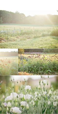 Flower farm in Essex, Massachusetts #weddings