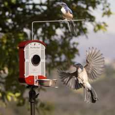 Bird feeder with a built-in camera