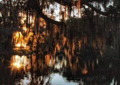 Sunrise  in City Park New Orleans.  Surrounded by golden light peeking through the Spanish moss & one little duck swimming in the golden light magical…
