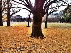 Koganei Park