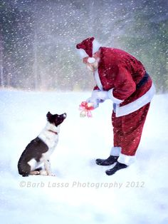 Christmas winter Santa Border Collie Snow Photograph by barblassa, $15.00