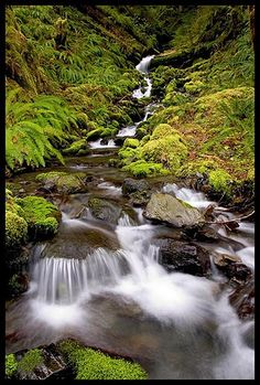 Quinault Rain Forest... a magical place. A healing place, and one of my most favorite places to be.