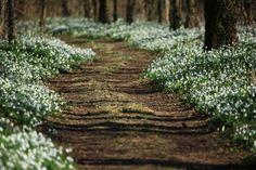lindasinklings: a barefoot walk. via (thegiftsoflife) Garden Paths, Garden Landscaping, Path To Heaven, Tunnel Of Love, Garden Studio, Woodland Creatures, Small Gardens, Pathways, Hungary
