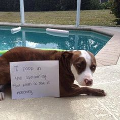 The Best of Dog Shaming - Part 17 | Little White Lion