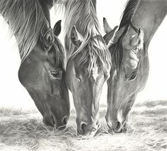 Drawing Charcoal Snack Time by Mary Ross Buchholz Graphite Horse Pencil Drawing, Horse Drawings, Realistic Drawings, Animal Drawings, Pencil Art, Pencil Drawings, Arte Equina, Horse Sketch, Scratchboard Art