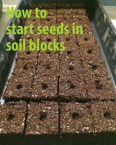 How to start seeds in soil blocks.