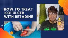 How To Treat Koi Ulcer With Betadine (Tagalog) Koi Fish Pond, Tagalog, Treats, Sweet Like Candy, Goodies, Sweets, Snacks