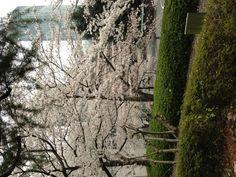 Hotel Okura garden.