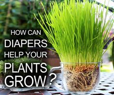 Picture of Diapers Help Your Plants Grow!