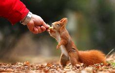Squirrel friend by Miroslav Hlavko on 500px