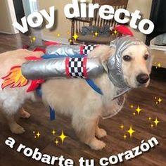 Memes Amor, Dankest Memes, Romantic Memes, Memes Lindos, Ex Amor, Cute Love Memes, Love Phrases, Spanish Memes, Pick Up Lines
