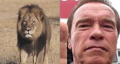 Arnold Schwarzenegger Weighs In On The Death Of Cecil The Lion, And He's Not Happy