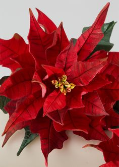 perfect poinsettia cake.  ,, BEST  POINTSETTIA  TUTORIAL I HAVE FOUND,,,,,,, FABULOUS