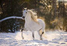Ekaterina Photography - Le Pure Race Espagnol