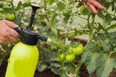 Backyard Planters, Small Backyard Gardens, Indoor Flowers, Indoor Plants, Organic Plants, Organic Gardening, Secret Garden Book, Plant Texture, Mosquito Repelling Plants