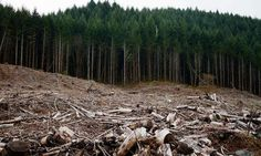 Temperature changes wreak ecological havoc in deforested areas, CU-Boulder study finds
