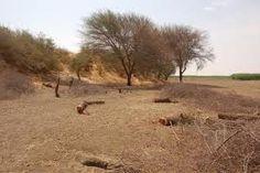 Folha certa : Desertificação no Semiárido Brasileiro