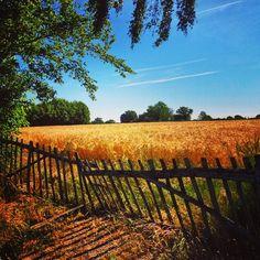 Un champ de blé en Berry via @emilienq