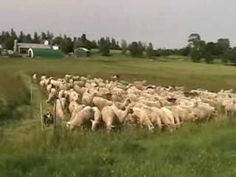 Temporary Sheep Fencing With Jack Kyle at Breezy Ridge Farm Sheep Fence, Wire Fence, Fencing, Backyard, Corgis, Goats, Buildings, Outdoor, Youtube
