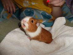 Piggy captured mid-squeak.