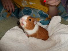 I miss my Pig