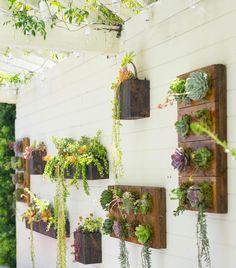 Vertical Succulent Garden by Dalla Vita