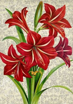 Arte Floral, Fabric Painting, Painting & Drawing, Watercolor Flowers, Watercolor Art, Art Painting Flowers, Flower Paintings, Florida Flowers, Amaryllis Bulbs