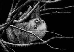 Sloth | 5x7 scratchboard | Melissa Helene Fine Arts + Photography www.melissahelene.com #art #artwork #scratchboard #scratchart #wildlife #sloth #animalart #endangeredspecies #conservation #conservationart #blackandwhite