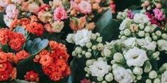 Plants, Home And Garden, Floral, Flowers, Herbs, Garden