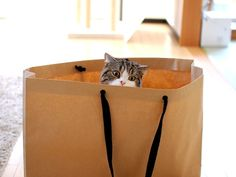 Maru hiding in a bag ©mugumogu