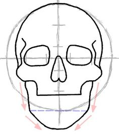 How to Draw a Skull in Front View