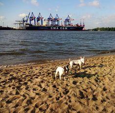 spaziergang mit Hund an der Elbe Hamburg