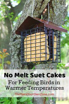 Suet Cake Recipe, Dog Safe Cake Recipe, Suet Bird Feeder, Bird House Feeder, Wild Bird Food, Wild Birds, Suet Cakes, Bird Seed Ornaments, Homemade Bird Feeders