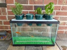 Aquaponics System, Hydroponic Farming, Backyard Aquaponics, Aquaponics Fish, Diy Hydroponics, Hydroponic Fish Tank, Growing Vegetables, Growing Plants, Fresh Vegetables