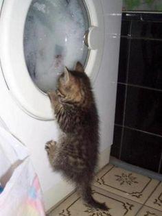 La chiamano lavatrice. .. mamma come me gira la testa!